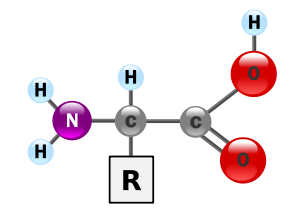 Alpha amino acid general structure